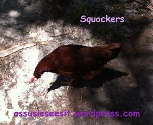 squockers